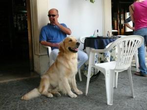 Golden retriever at Piazza